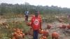 PumpkinPatchPhoto.jpg