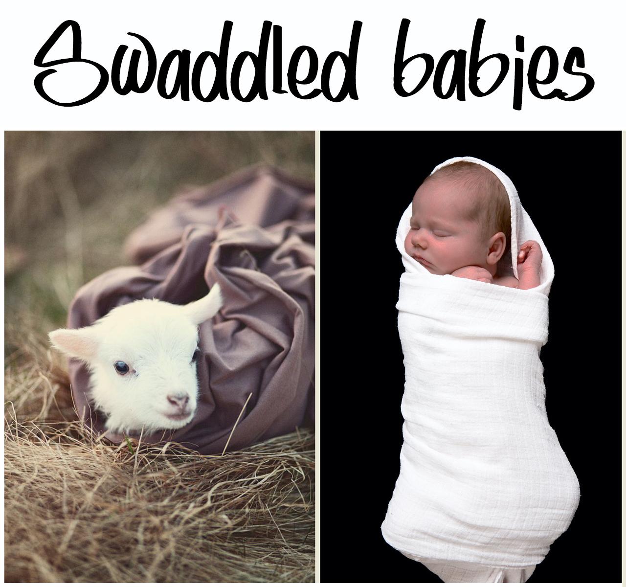 Image - Swaddled babies